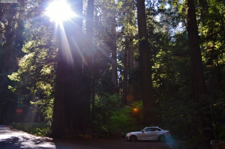 BMW-M235i-USA-Roadtrip-Redwood-National-Park05