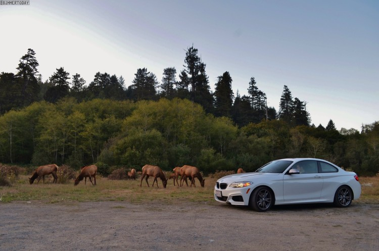 BMW-M235i-USA-Roadtrip-Redwood-National-Park13