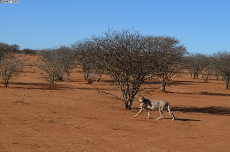 BMW-Namibia-Driving-Experience-Afrika-25